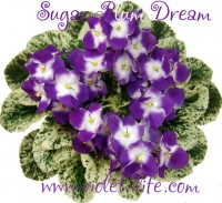 Sugar Plum Dream